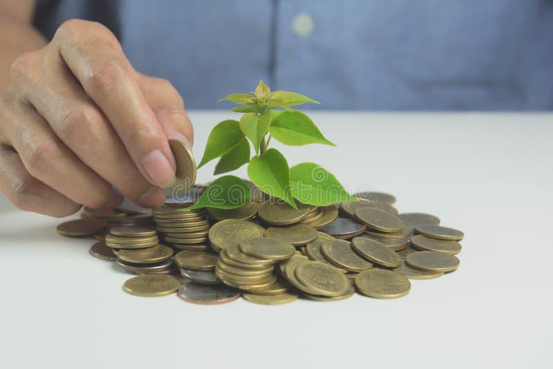 生长从金钱的金钱树的概念 财政和挽救 免版税库存照片