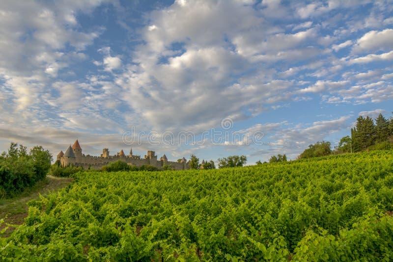 生长卡尔卡松外中世纪堡垒的葡萄园  图库摄影