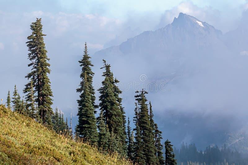 生长在一个陡峭的山坡外面的松树 免版税图库摄影