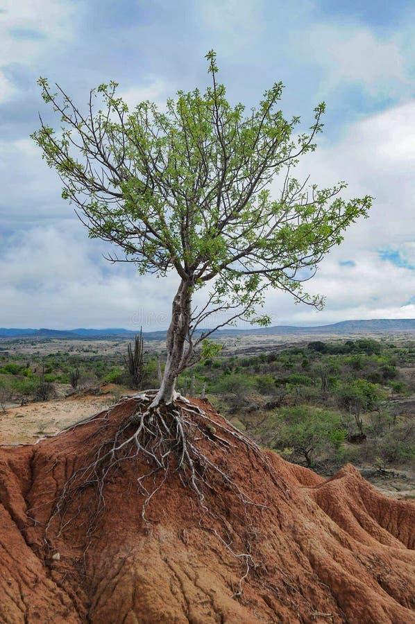 生长在一座小山的小树 免版税库存照片