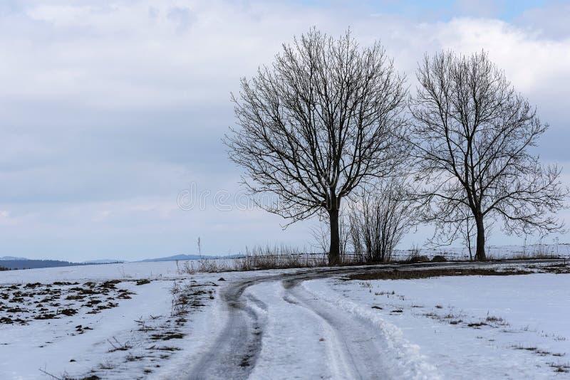 生长在一条冬天道路的弯的两棵光秃的树在一个多雪的风景的在高地 免版税库存照片