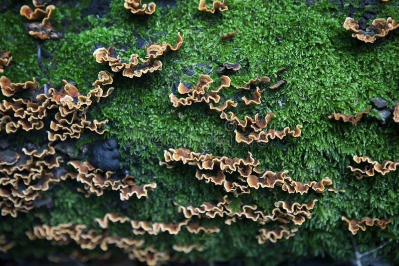 生长在下落的树的蘑菇 库存图片