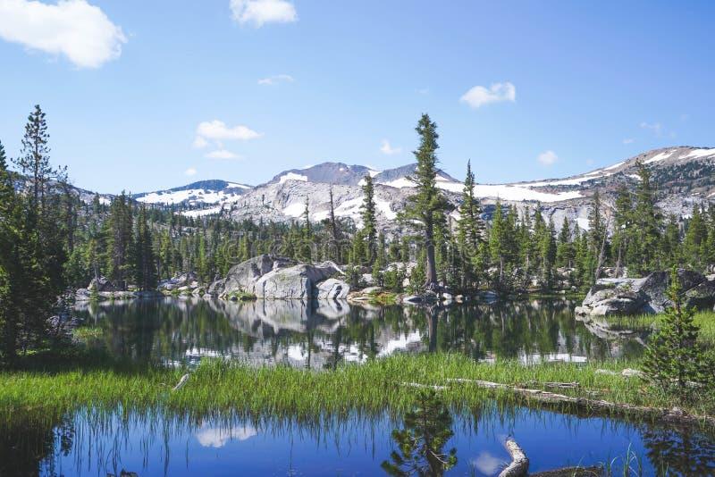 生长在与树和山的水中的绿草在背景中在太浩湖,加州附近 免版税库存照片