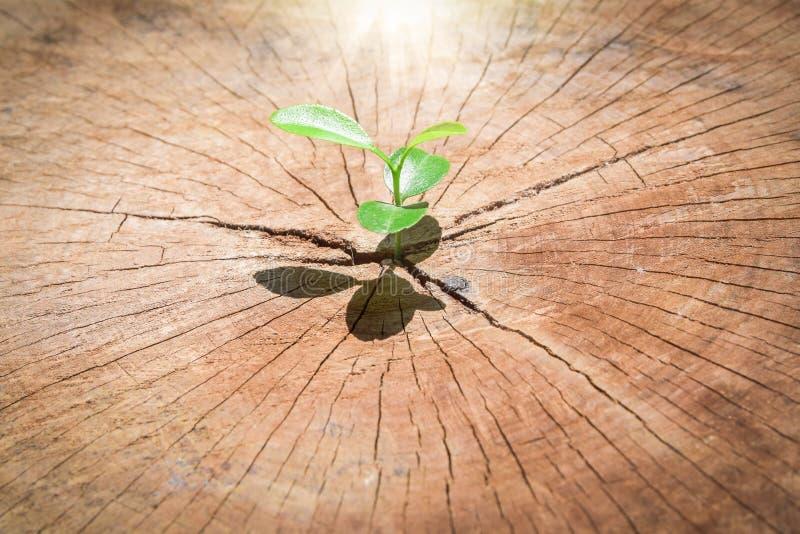 生长在中心树干树的强的幼木作为支持大厦的概念每未来 (焦点在新的生活) 免版税库存照片