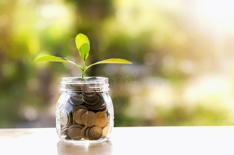 生长在储款硬币的植物-投资和兴趣 免版税库存图片