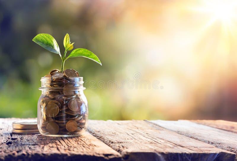 生长在储款硬币的植物 库存照片