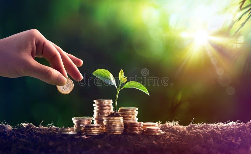 生长在储款硬币金钱的植物 库存照片