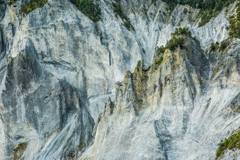 生长在剧烈和坚固性落矶山峭壁的杉树 免版税库存图片