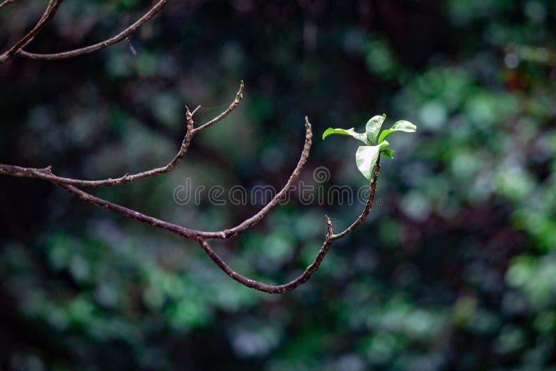 生长在否则光秃的树枝的小叶子 库存图片