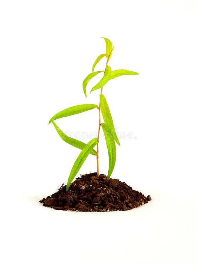 生长在土壤的植物 免版税库存照片