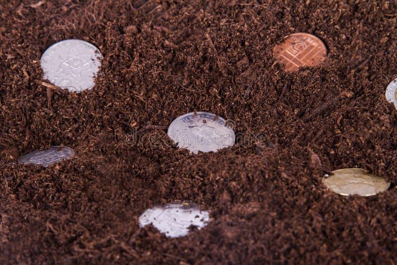 生长在土壤的硬币 库存图片