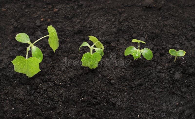 生长在地球的背景,新的生活成长生态企业财政概念,世界地球日的年幼植物 图库摄影