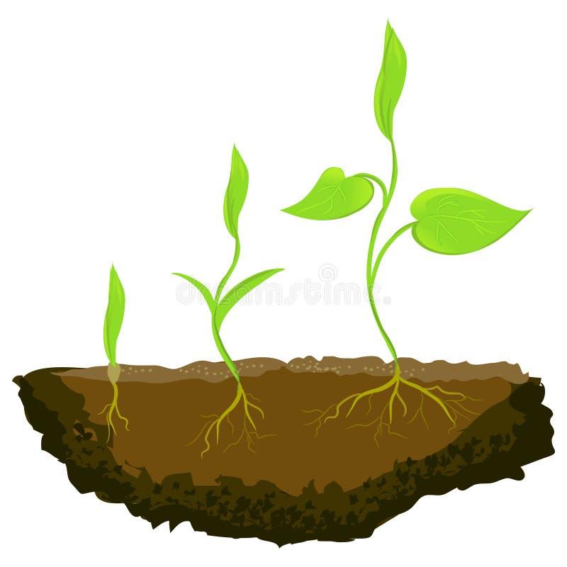 生长在地面的三棵植物 向量例证