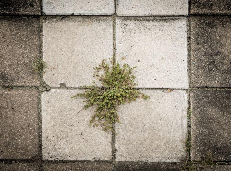 生长在小径步行方式外面的植物 库存图片
