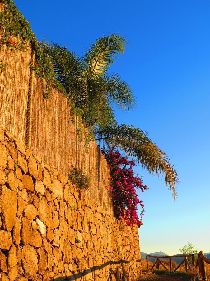 生长在岩石护墙上的九重葛灌木 免版税图库摄影