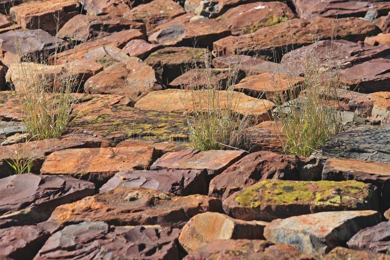 生长在平的岩石之间的绿草一束 图库摄影