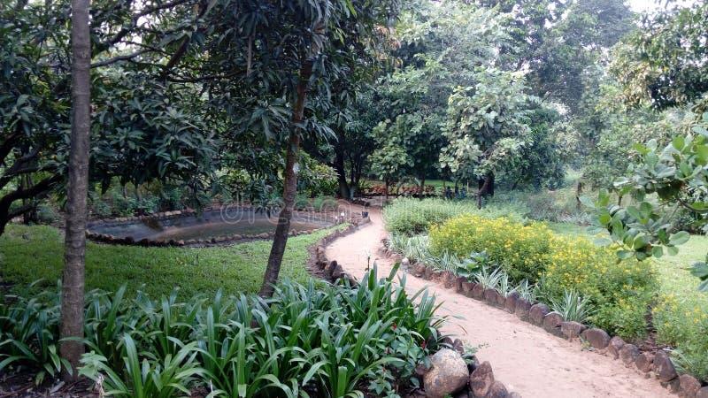 生长在庭院里的植物和树 免版税库存图片
