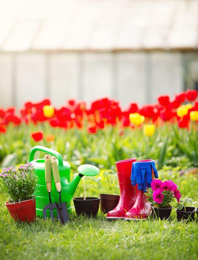 生长在庭院里的花和菜幼木 库存照片