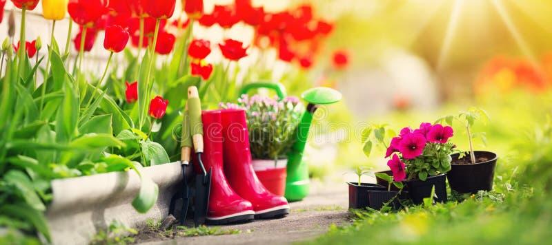 生长在庭院里的花和菜幼木 图库摄影