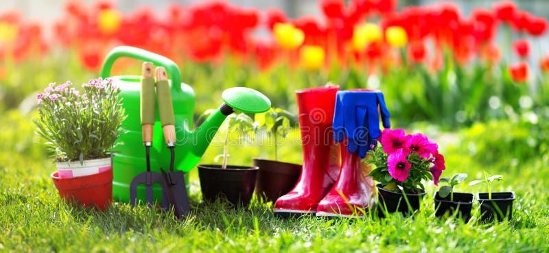生长在庭院里的花和菜幼木 免版税库存照片