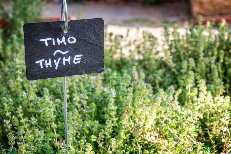 生长在庭院里的麝香草,标记用英语和意大利语 库存图片