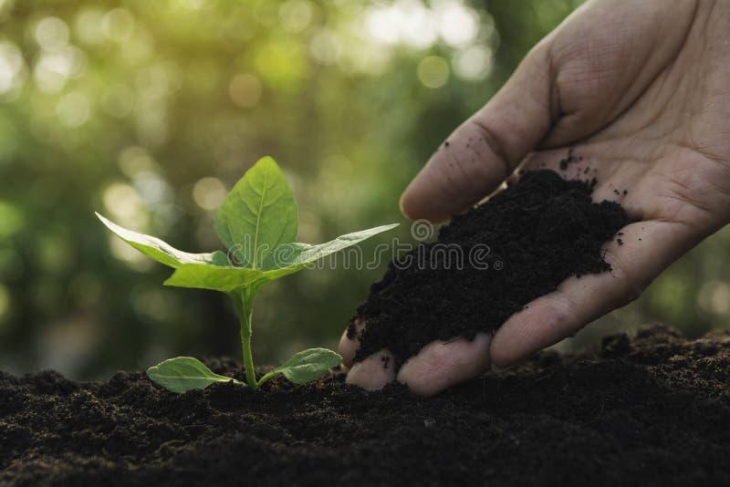 生长在插入物文本的土壤和拷贝空间的幼木和植物 免版税库存图片