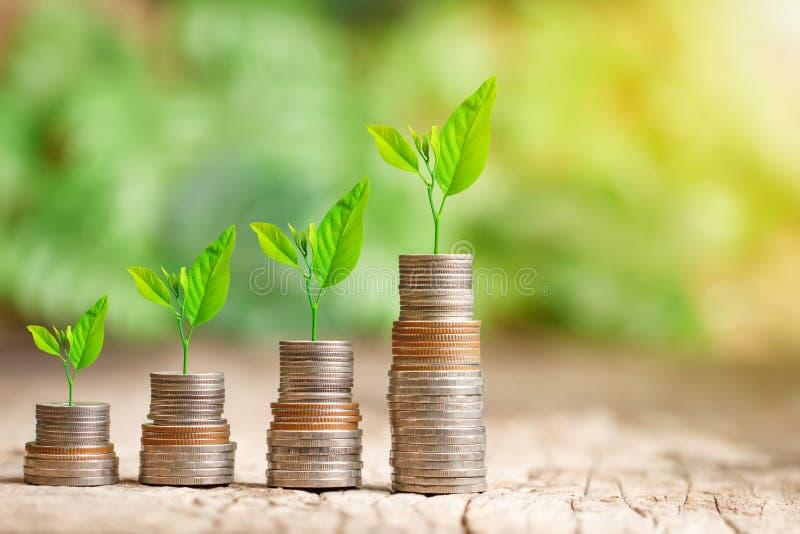 生长在攒钱概念的硬币堆的树 库存图片