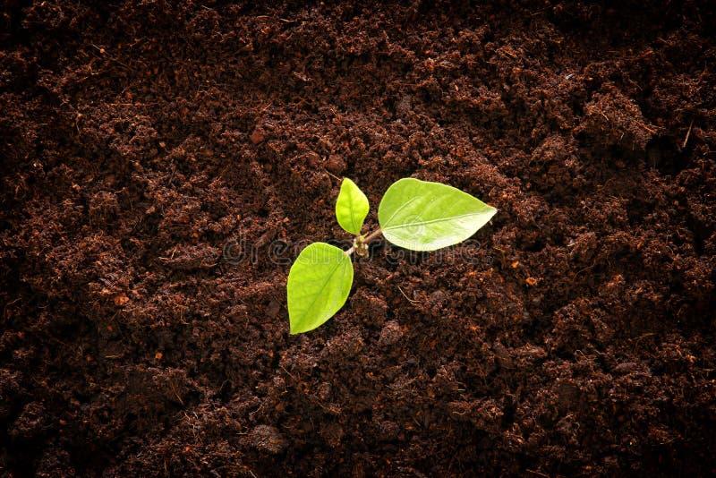 生长在新地面的年幼植物 新的起动和生态概念 库存照片