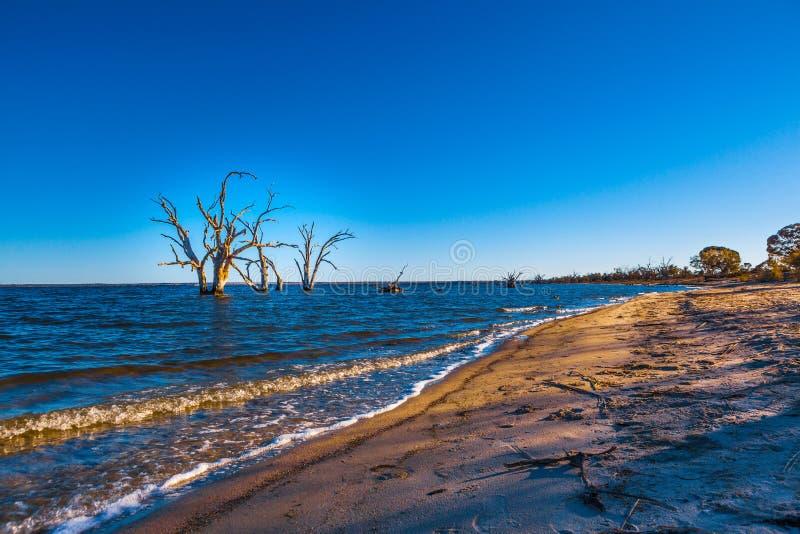 生长在水中的贫瘠死的树 图库摄影