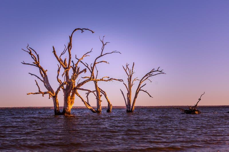 生长在水中的贫瘠死的树 免版税图库摄影