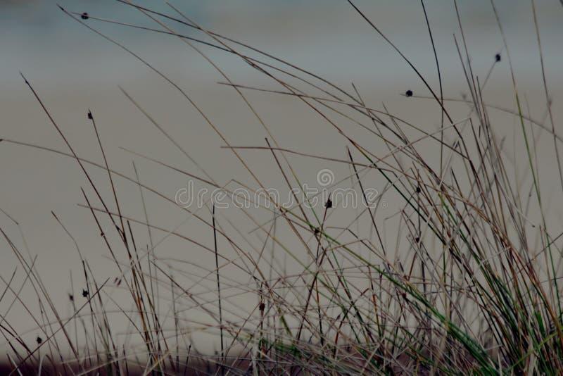 生长在沙子的植物 库存照片