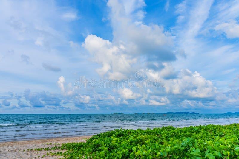 生长在沙子的海滩牵牛花 图库摄影