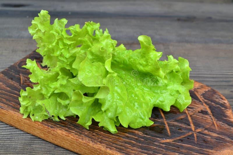 生长在沙拉庭院里的绿色活页莴苣 在切板的巴达维亚沙拉 库存照片