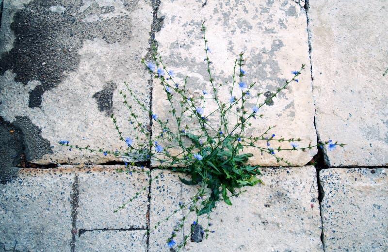生长在混凝土外面的植物 库存图片