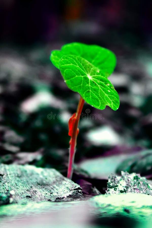 生长在混凝土的婴孩植物 免版税库存图片