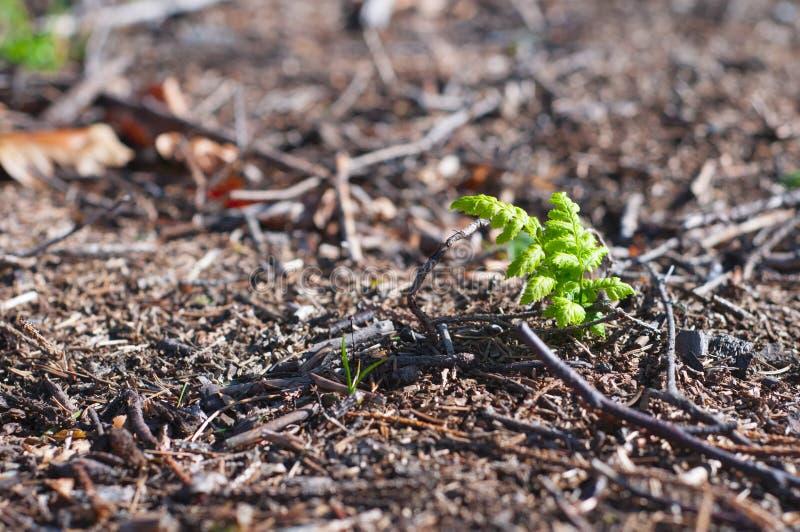 生长在灰色环境的植物 库存照片