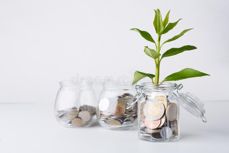 生长在玻璃瓶子的硬币的植物 库存图片