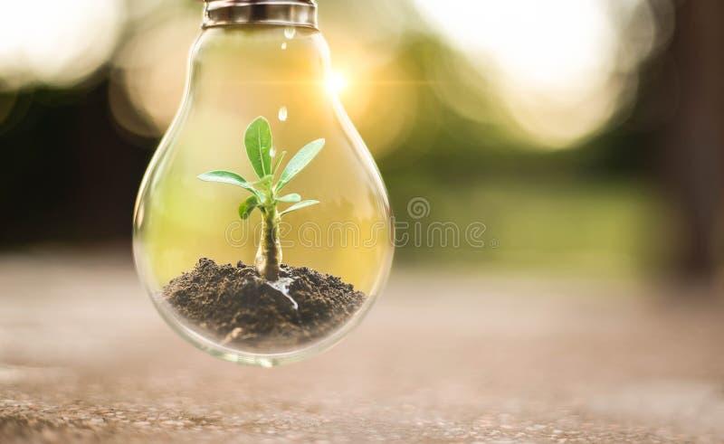 生长在电灯泡的土壤的树 地球日创造性的想法或保存能量和环境概念 库存图片