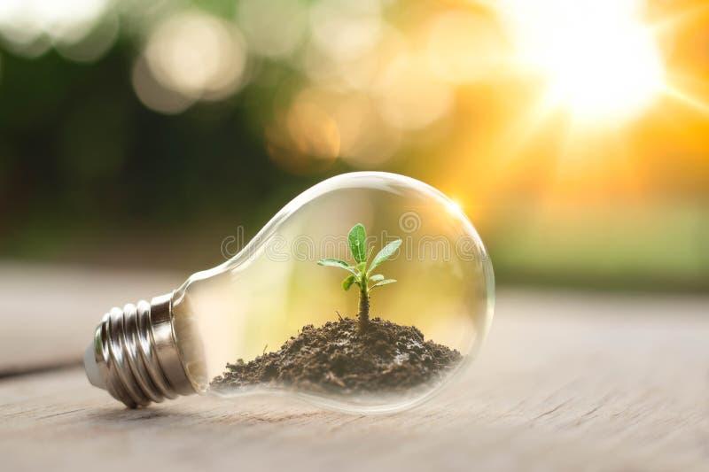 生长在电灯泡的土壤的树 地球日创造性的想法或保存能量和环境概念 免版税库存图片