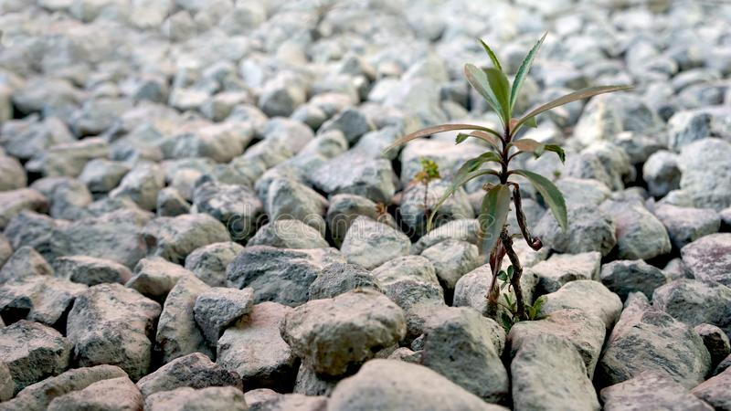 生长在石头的小植物 库存图片