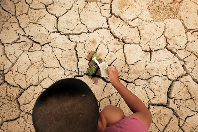 生长在破裂的地面的树 崩裂在天旱的旱田,影响全球性变暖做的气候变化 缺水 库存图片
