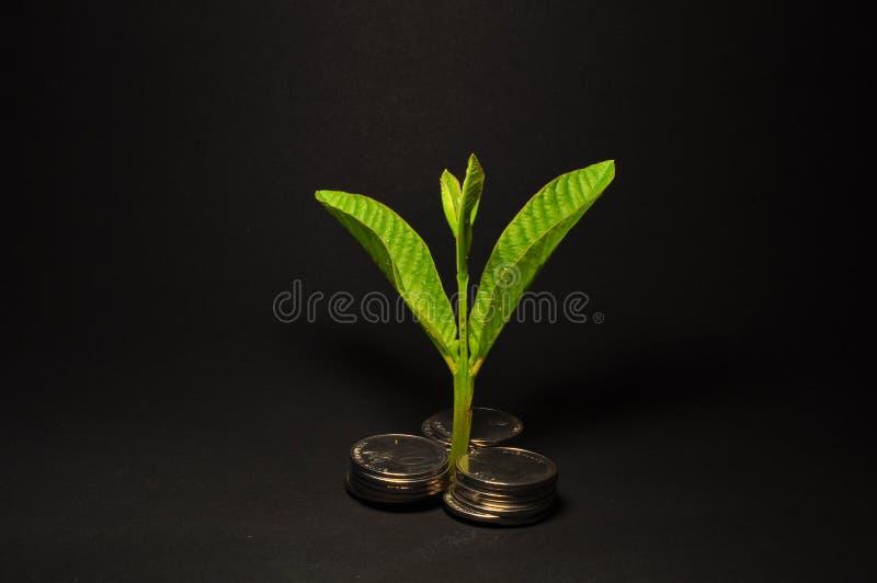生长在硬币的植物 攒钱和投资概念 库存图片
