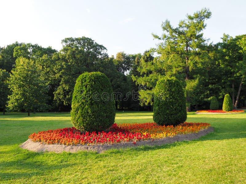 生长在红色,橙色和黄色花花床上的被整理的椭圆形的树风景在公园 免版税库存图片
