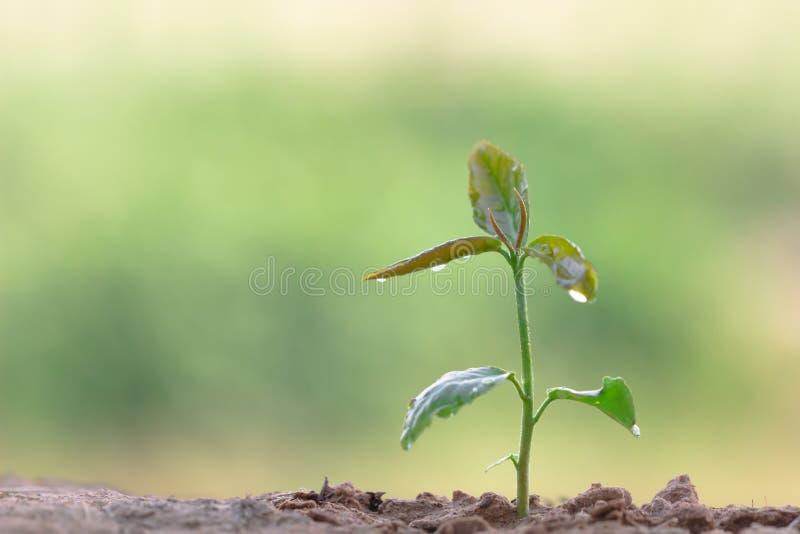 生长在绿色背景的年幼植物的关闭 库存照片