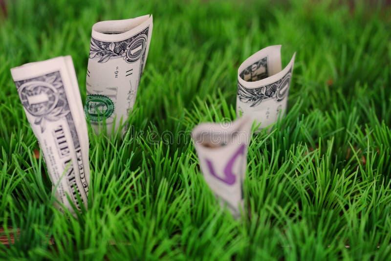 生长在绿草的美元钞票 库存图片