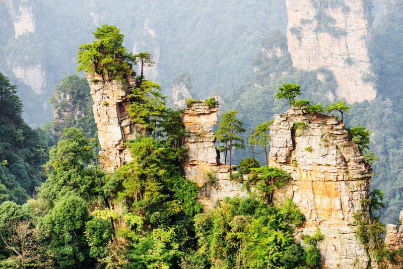 生长在自然石英砂岩柱子上面的绿色树  免版税图库摄影