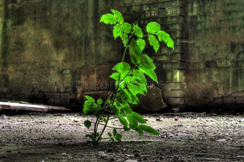 生长在被放弃的工厂的植物 免版税图库摄影