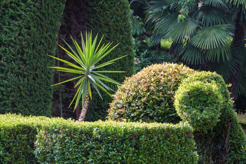 生长在豪华的绿色公园的小棕榈树 库存照片