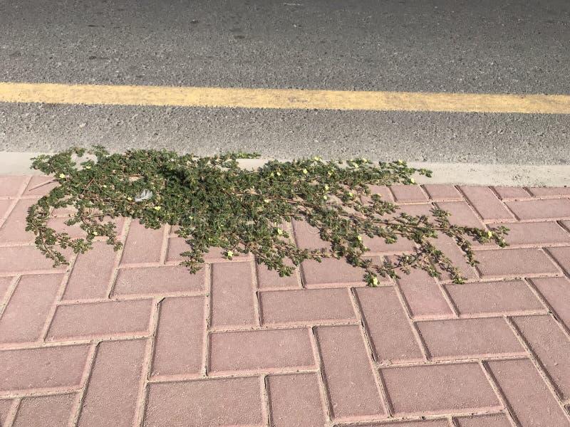 生长在边路的植物 免版税图库摄影