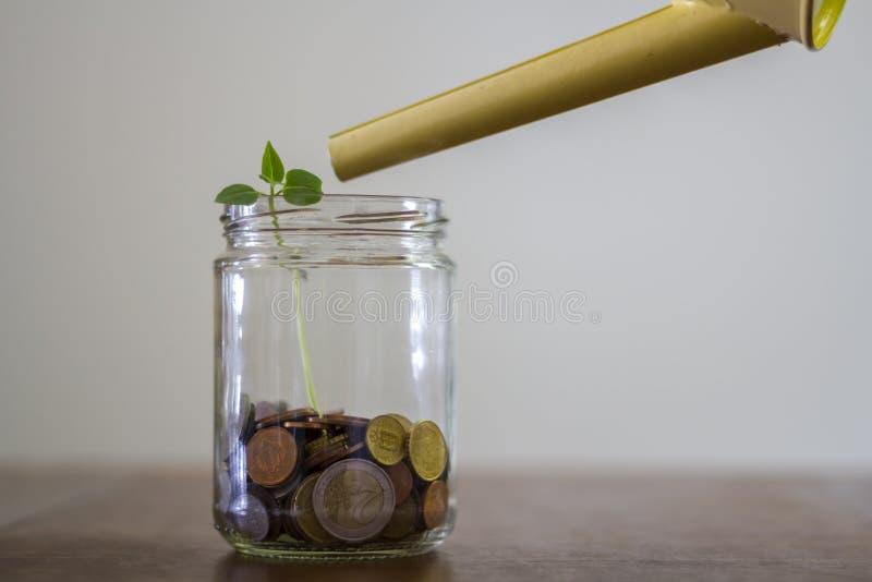 生长在金钱瓶子和喷壶的植物在它上 投资和储款概念 免版税库存图片